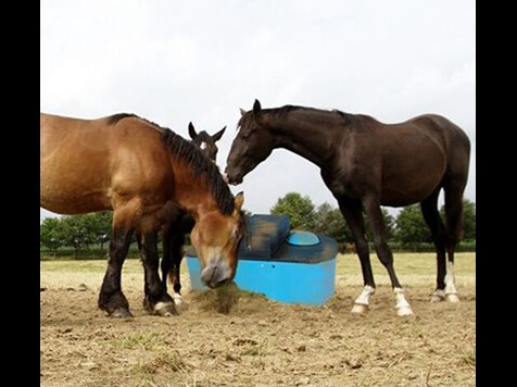 Leading Horses to a More Energy Efficient Drink-General Purpose